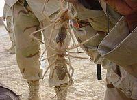 Gruppenavatar von Nur eine tote Spinne ist eine gute Spinne