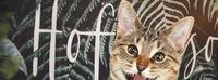 Hofkatze - Katze Katze goes Open Air@Katze Katze