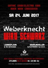 Weberknecht wird schwarz | 24. Juni@Weberknecht