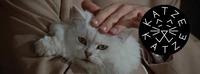 Muschi in der Muschi w/ Diana May@Katze Katze