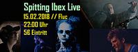 Spitting Ibex Live