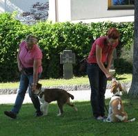 Jundehunde und Grundkurs@Hundeverein Saalfelden