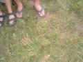 Forestglade Juli 2004 34880642