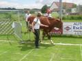 Brucker Fladenroulette 2011 75677017