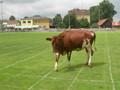Brucker Fladenroulette 2011 75677019