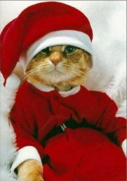 Gruppenavatar von ★★★Bei LAST CHRISTMAS könnt ich kotzen★★★