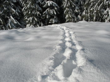 Gruppenavatar von ...ich liebe es durch den Schnee zu stapfen!!!