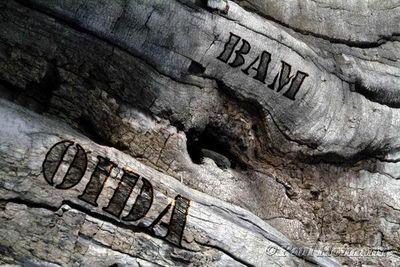 Gruppenavatar von Fix Oida, Im Woid Oida, Am Bam Oida
