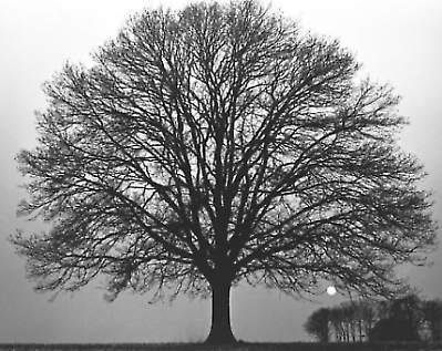 Gruppenavatar von Ich mag Bäume!