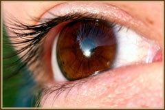 Gruppenavatar von braune Augen Haber/in