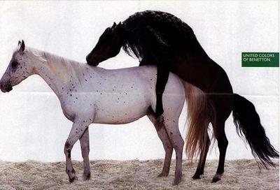 Pferden sex mit Zoophilie Sex