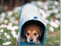 Gruppenavatar von Hunde die besten Freunde der Menschen