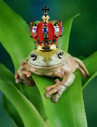 Gruppenavatar von wo ist mein frosch? aber bitte mit krone.