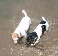 Gruppenavatar von Jack Russell  Terrier