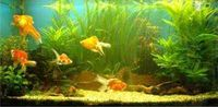 Gruppenavatar von oO°..anti-gegens-aquarium-klopf-club..°Oo