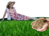Ficken, Bumsen, Blasen tun wir auf den Rasen, ist der Rasen weg Ficken wir in Dreck !!