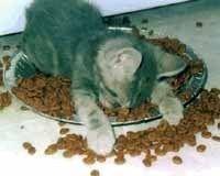 Gruppenavatar von meine Katze leidet an Adipositas...