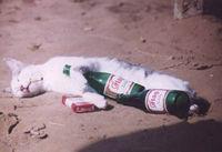 Gruppenavatar von ich habe keine Probleme mit Alkohol!!!! nur ohne