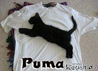 Gruppenavatar von PUMA