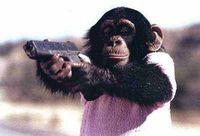Gruppenavatar von Warum essen eigentlich Affen Bananen...und keine Chips?