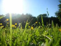 Es ist schon über soviele Dinge Gras gewachsen, dass man eigentlich keiner Wiese mehr trauen kann.