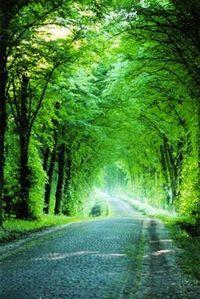 Alleeeeee, Alleeeeee, Allee, Allee, Alleeeeee, eine Straße mit vielen Bäumen, ja das ist eine Alleeeeee