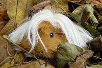 Gruppenavatar von Ich werde nie lernen, dass man nicht schlafen geht, wenn man noch nasse Haare hat -.-