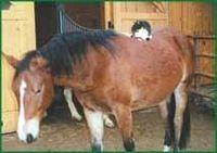 Gruppenavatar von wenn meine katze ein pferd wäre, könnte ich bäume hochreiten...