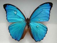 Gruppenavatar von Du willst Schmetterlinge im Bauch? Steck dir Raupen in den Arsch!!