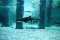 Gruppenavatar von Ich spar für ein Haifischbecken für Benjamin Blümchen