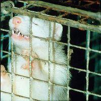 Gruppenavatar von Ich verachte Menschen die echte Pelze tragen!!!