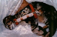 Gruppenavatar von Stoppt Tierversuche !!!!! Die Armen Tiere!