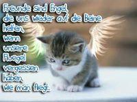 Gruppenavatar von Freunde sind Engel, die uns wieder auf die Beine helfen, wenn unsere Flügel vergessen haben, wie man fliegt...