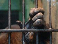 Tiere in Gefangenschaft werden Verhaltensgestört