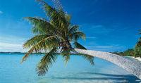 Gruppenavatar von Im Winter ab in die Karibik:-)