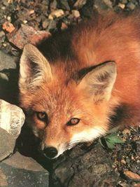 Gruppenavatar von Lasst die armen Tiere leben, oder bringt sie wenigstens um bevor ihr sie häutet!!!!!!