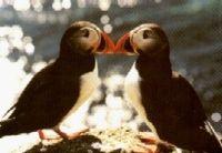 Gruppenavatar von <3 Tötet nicht die Vögel, den ihr Vögelt auch nicht die Toten <3