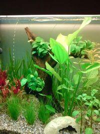 Gruppenavatar von Ein Aquarium ist das schönste!