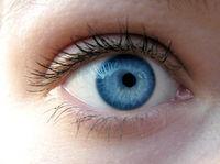 Durch blaue Augen sieht man besser!