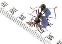 Gruppenavatar von Ameisen züchten ist geil!!