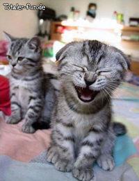 Gruppenavatar von Lebe nie ohne zu Lachen, denn es gibt Menschen die von deinem Lachen leben