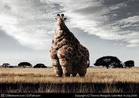Gruppenavatar von Giraffen sind Pferde, die sich als Kran verkleiden.