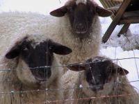 Gruppenavatar von Ich bin so cool die Schafe zählen mich wenn sie einschlafen!