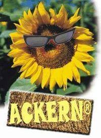 Ackern@Sonnenblumenfeld