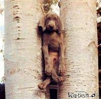 Gruppenavatar von Der Hund is beinaund--> The dog is together