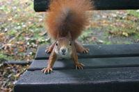 """Gruppenavatar von """"Denkst du das Selbe wie Ich?"""" """"Ja, aber wo bekommen wir die ganzen Eichhörnchen her?"""""""