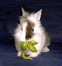Gruppenavatar von Papa,darf ich ein Kaninchen haben? *zuckersüßdreinschau*
