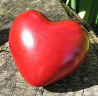 Gruppenavatar von *Mein Herz veranstaltet Dinge, die der Verstand nicht nachvollziehen kann!*