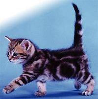 Gruppenavatar von Katzenliebhaber