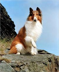 Gruppenavatar von Ich sehe zwar nicht aus wie Brad Pitt, und bin auch nicht stark wie Schwarzenegger, aber LECKEN kann ich wie Lassie !!!